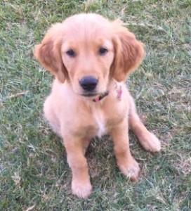 Molly Baca Puppy 06202015